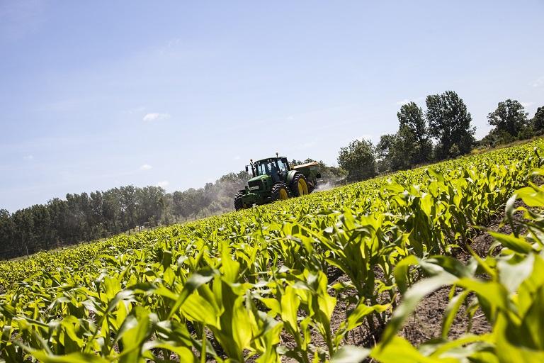 Apport d'engrais minéral sur maïs au stade 8-10 feuilles