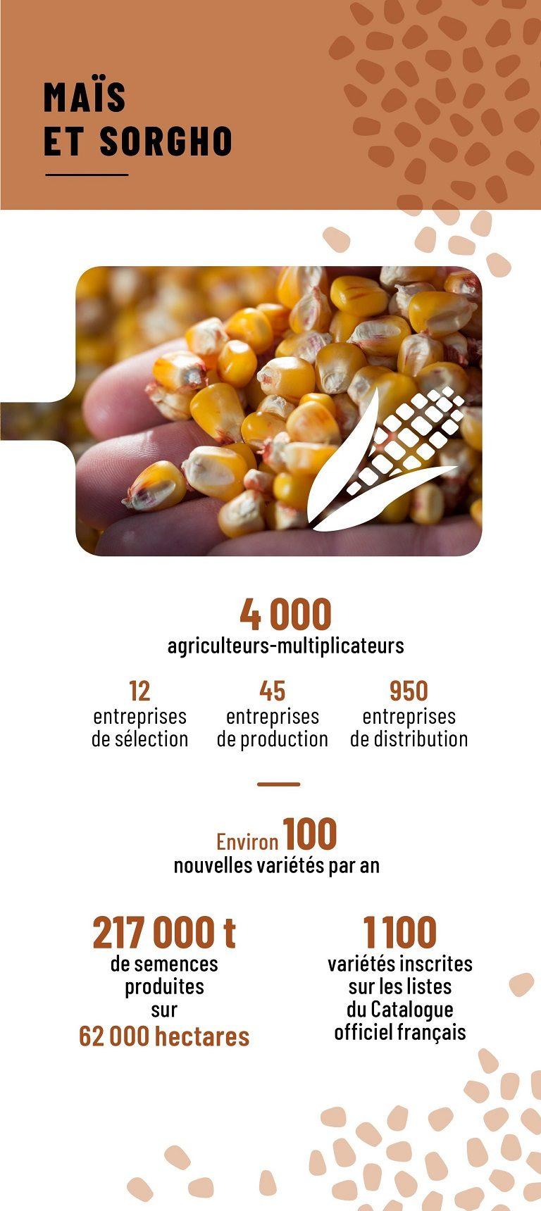 Chiffres clés de la filière semences maïs et sorgho